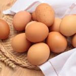 Mengenal Telur Ayam